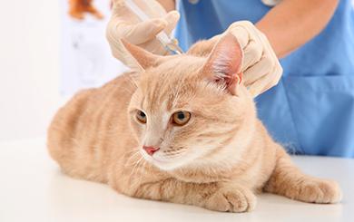 Вакцина от чумки для кошек